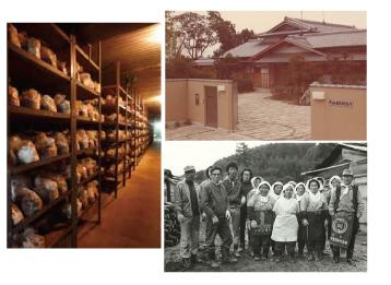 シイタケからハナビラタケまで、きのこ歴史65年