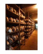ハナビラタケの培養室です。